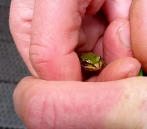 16 mei frog