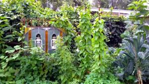 tuin nazomeren